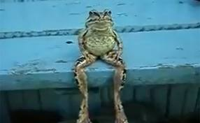 frog on a bench